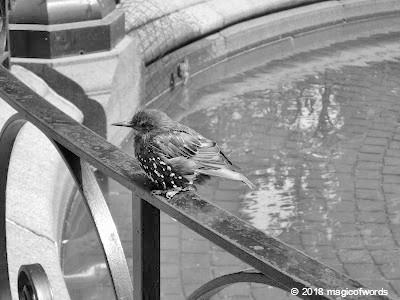 bird_fountain