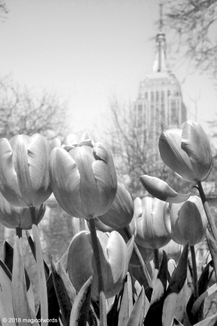 empire_tulips